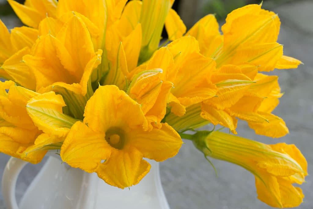 Pumpkin flowers in vase