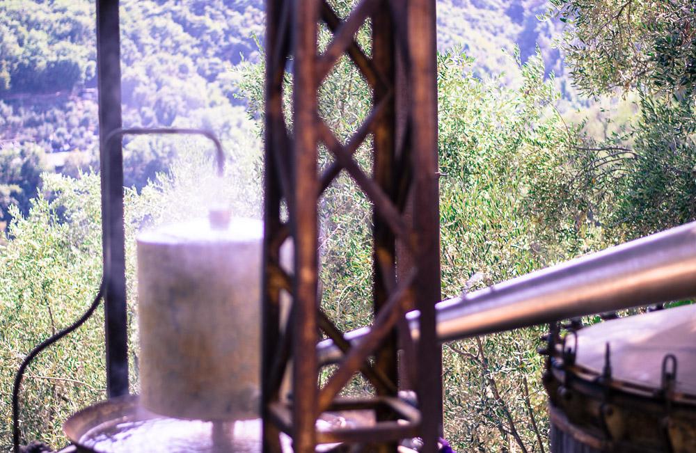 Lavender distillation 2