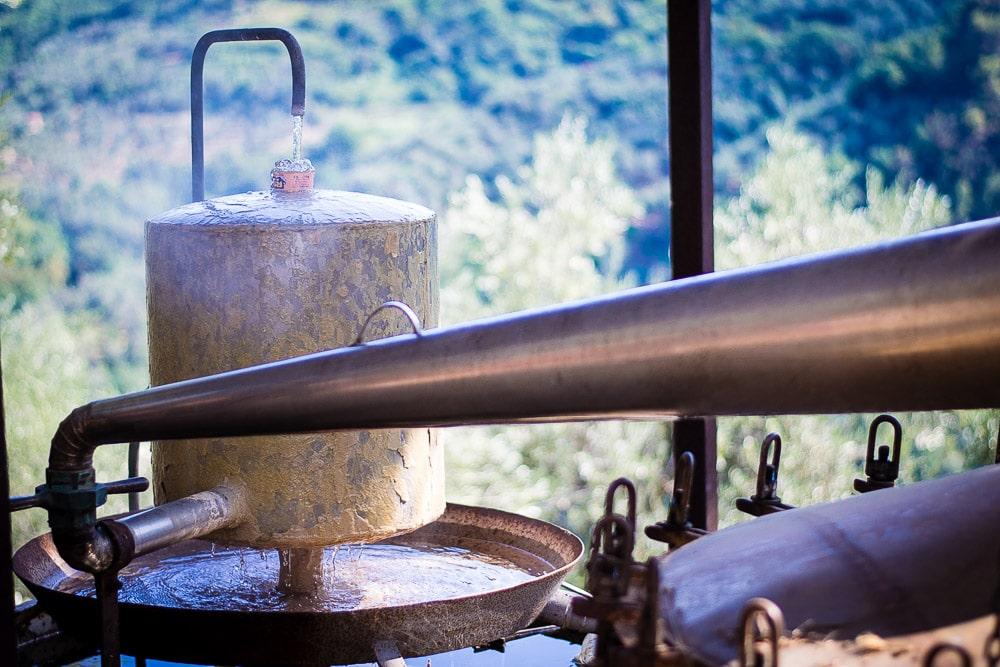 Lavender distillation